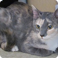 Domestic Shorthair Cat for adoption in Grinnell, Iowa - Victoria