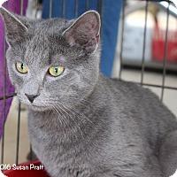 Adopt A Pet :: Blueberry - Bedford, VA