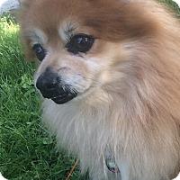 Adopt A Pet :: SMOKEY - Mahopac, NY