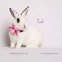 Adopt A Pet :: Tink - Jurupa Valley, CA