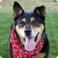 Adopt A Pet :: Dex - Columbia, IL