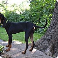 Coonhound Mix Dog for adoption in Manhattan, Kansas - Tank-adoption pending