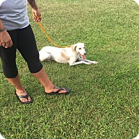 Adopt A Pet :: Polly - Goldsboro, NC