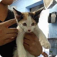 Adopt A Pet :: URGENT on 10/15 San Bernardino - San Bernardino, CA