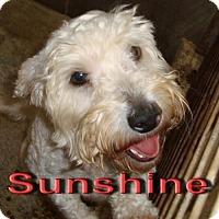 Adopt A Pet :: Sunshine - Coleman, TX