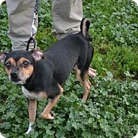 Adopt A Pet :: Acorn - Akron, OH