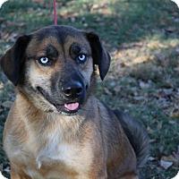 Adopt A Pet :: Newman - Conway, AR