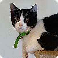 Adopt A Pet :: Josie - Bloomfield, NJ