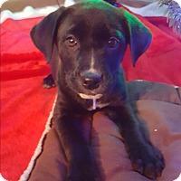 Adopt A Pet :: Clarice - Hainesville, IL