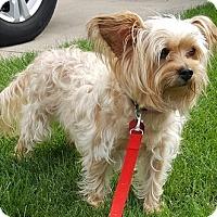 Adopt A Pet :: Dixie - Beavercreek, OH