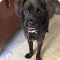 Adopt A Pet :: Alfie - Flower Mound, TX