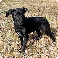Adopt A Pet :: PUPPY AUTUMN - richmond, VA