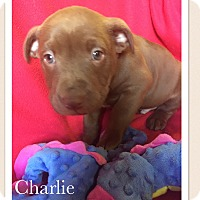 Adopt A Pet :: Charlie - Smithfield, NC