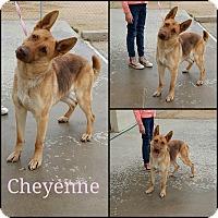 Adopt A Pet :: Cheyanne - California City, CA