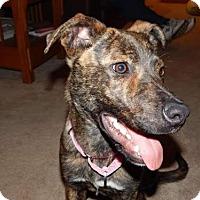 Adopt A Pet :: Maxine - Tonawanda, NY