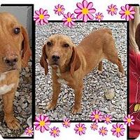 Adopt A Pet :: Jamie (bonded to Silo) - Newport, KY