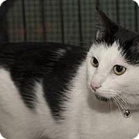 Adopt A Pet :: Noel - Lombard, IL