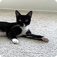 Adopt A Pet :: Emma - San Diego, CA