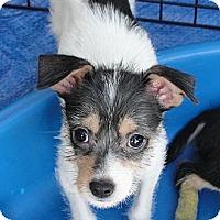 Adopt A Pet :: Nala - Garden Grove, CA