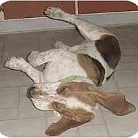 Adopt A Pet :: Ears - Phoenix, AZ