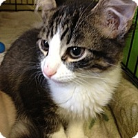 Adopt A Pet :: Seuss - Byron Center, MI