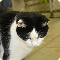 Adopt A Pet :: Summer - East Smithfield, PA