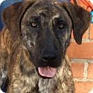 Adopt A Pet :: MAY (video)