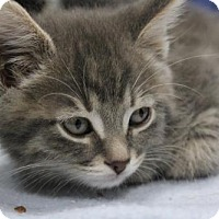 Adopt A Pet :: Gill - Caistor Centre, ON