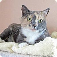 Adopt A Pet :: Tasha - Devon, PA