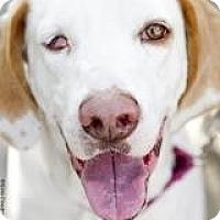 Adopt A Pet :: Wilson - Brooklyn, NY