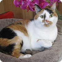 Adopt A Pet :: Emmy De clawed in front - Witter, AR