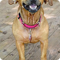 Adopt A Pet :: Dolly Girl - Atlanta, GA