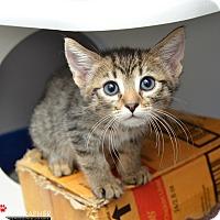 Adopt A Pet :: Pauly - San Francisco, CA