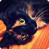 Adopt A Pet :: Jolene - St. Louis, MO