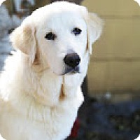 Adopt A Pet :: Willow - Garland, TX
