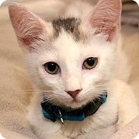 Adopt A Pet :: Spooky - Wilmington, NC