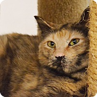 Adopt A Pet :: Alyce - Lincoln, NE