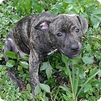 Adopt A Pet :: John Boy - Bradenton, FL