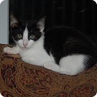 Adopt A Pet :: Joelle - Great Mills, MD