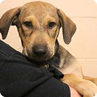 Adopt A Pet :: Charlie Brown~meet me~ - Glastonbury, CT