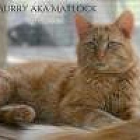 Domestic Mediumhair Cat for adoption in Columbia, Tennessee - Murray aka Matlock