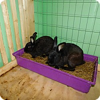 Adopt A Pet :: Martin - Elizabethtown, KY