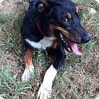 Adopt A Pet :: Honey - Nashua, NH
