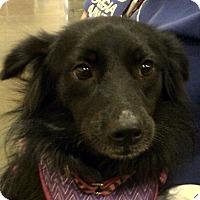 Adopt A Pet :: Betsy Bug - Newnan, GA