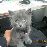 Adopt A Pet :: MOUSER - San Antonio, TX