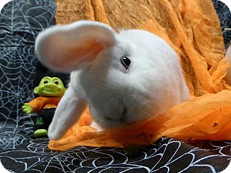 Lop-Eared Mix for adoption in Alexandria, Virginia - Dervish