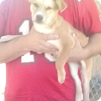 Adopt A Pet :: Lois - Wytheville, VA