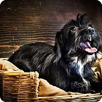 Adopt A Pet :: Deelight - Yelm, WA