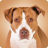 Adopt A Pet :: Karley - Prescott, AZ