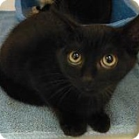 Adopt A Pet :: scarry - Queenstown, MD